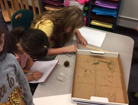 Wilmore-Davis Elementary students investigate plant seeds